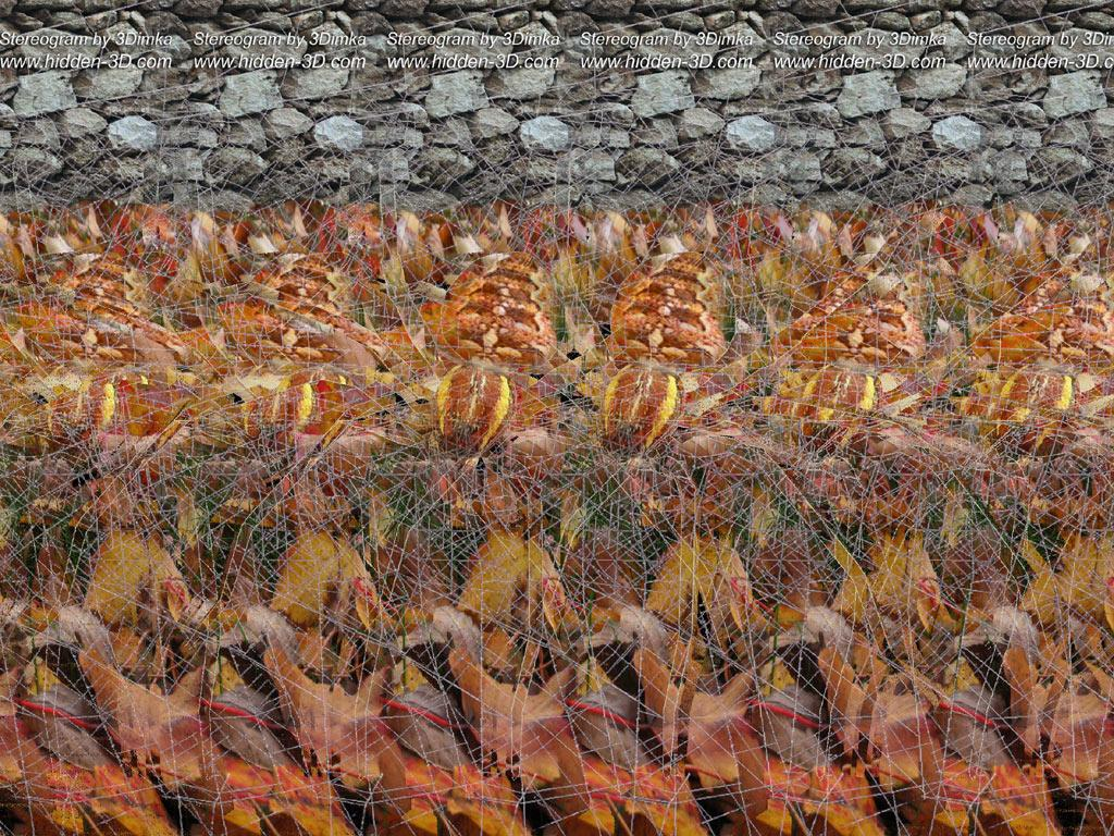 Stereogram by 3Dimka: Eight legs. Tags: spider, insect, spiderweb, hidden 3D picture (SIRDS)