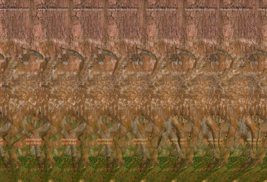 Stereogram by 3Dimka: Deer Forest. Tags: deer, forest, mashrooms, trees, hidden 3D picture (SIRDS)