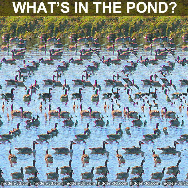 Stereogram by 3Dimka: What is in the pond?. Tags: puzzle pond lake river gees mermaid girl, hidden 3D picture (SIRDS)
